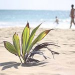 Mein Sommerurlaub 2013 alias Karibik 2014